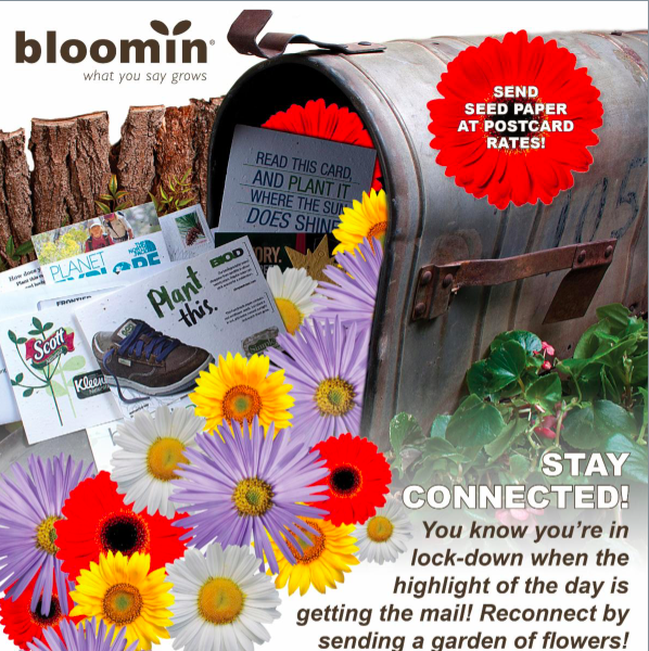 Bloomin DM